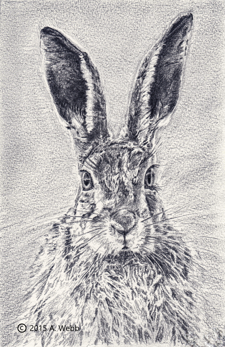 Solemn-Hare