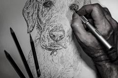 Golden-Labrador