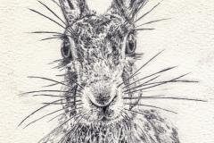 Sassy-Hare